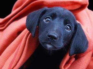 Фотосъемка домашних животных